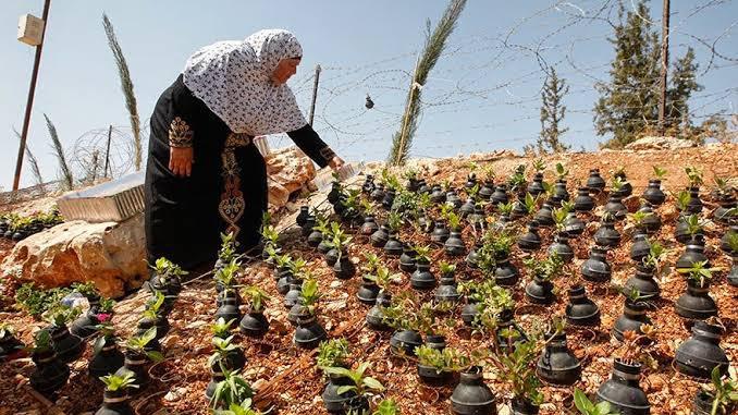 İsrail'in Attığı Gaz Bombalarından Çiçek Bahçesi Yaptı
